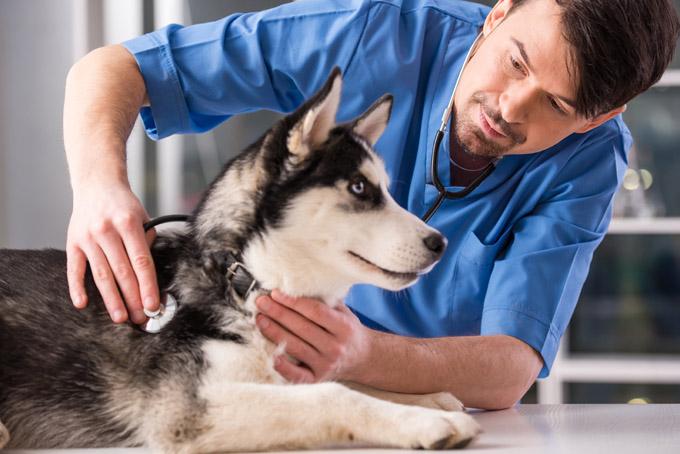 find-veterinarian