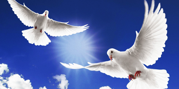 dove-release-memorial-service-ideas