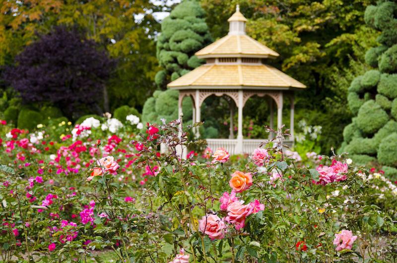 Rose Garden, gazebo